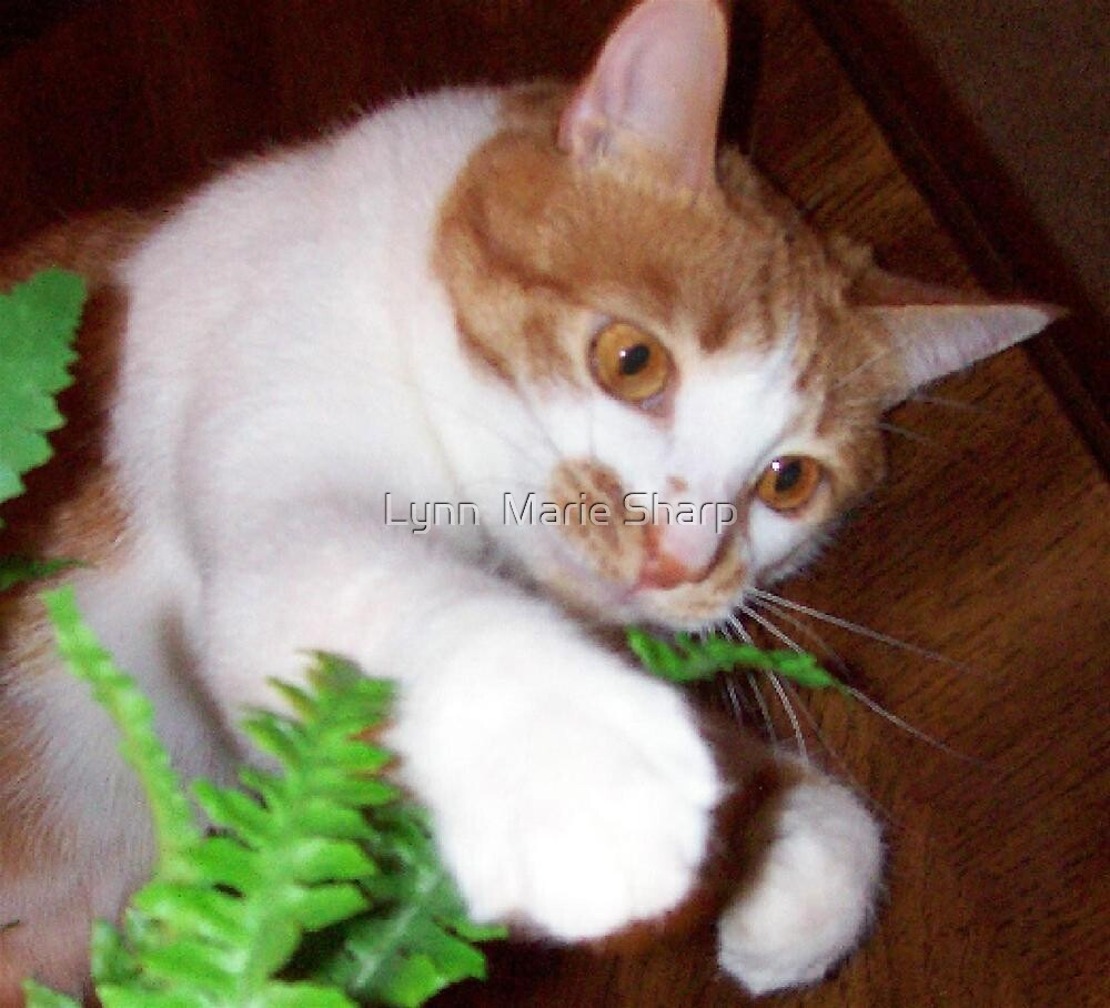 Molly Playing With A Silk Fern by Marie Sharp