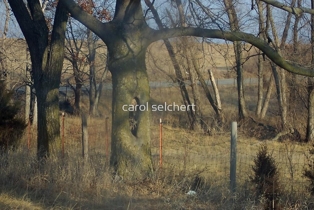 Dancing tree by carol selchert