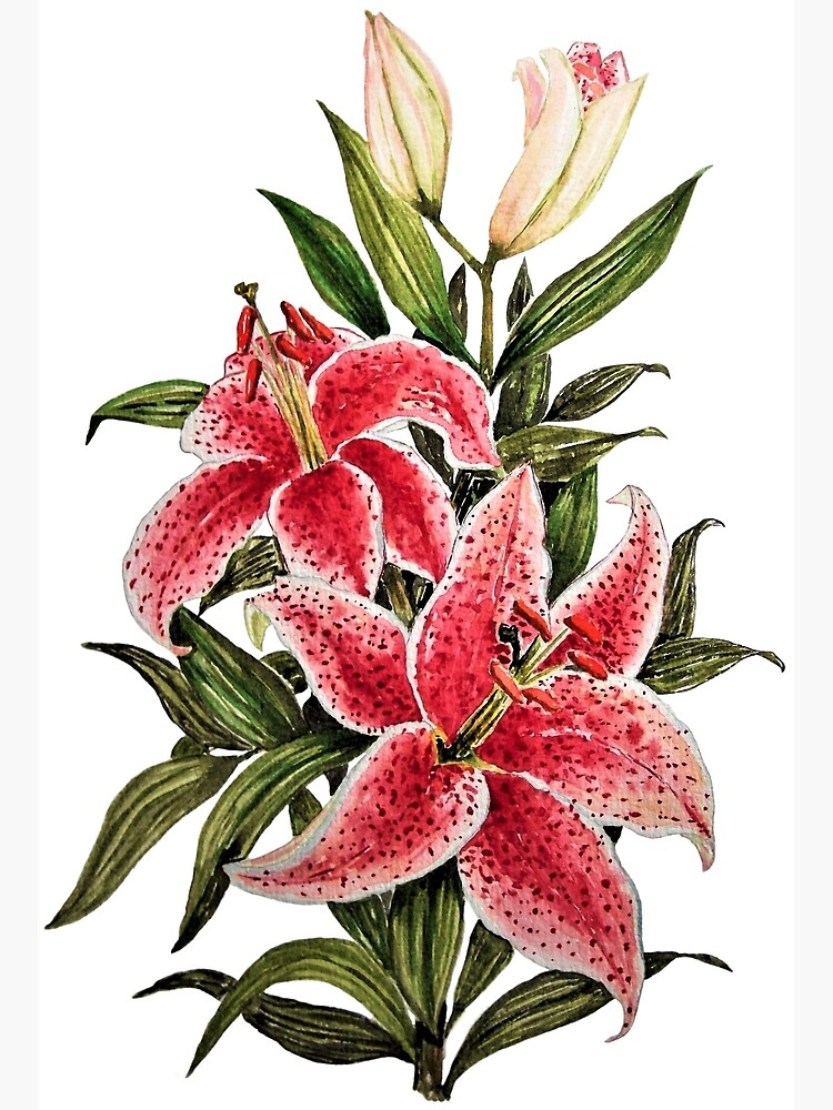 Lily Flowers Watercolor Art Greeting Card By Oirabot Redbubble