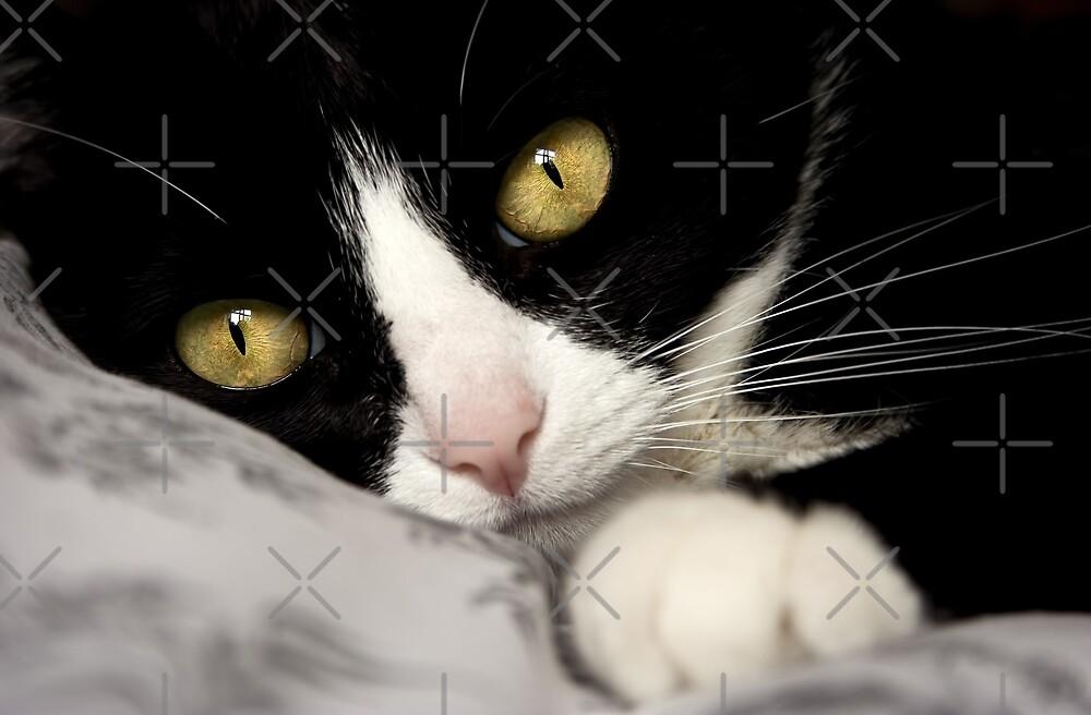 Beautiful Cat by Ingrid Beddoes