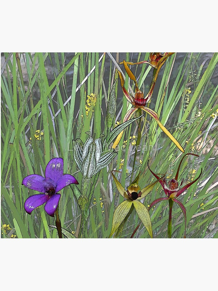 Margaret River Orchids with Grasses by yallmia