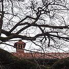 Sleek Rainy Day Rooftop Through the Mighty Branches by Georgia Mizuleva