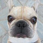 french buldog funny face by Collagedream