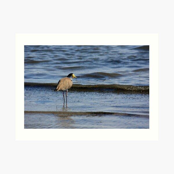 Wading Plover Art Print