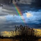 the rainbow by Gabi Swanson
