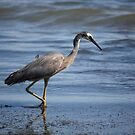 Heron In Shallow Waters by reflector