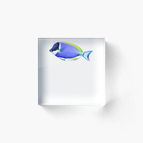Powder Blue tang saltwater reef fish Acrylic Block