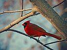 Pretty Cardinal by FrankieCat