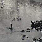 Great Cormorants freezing 2 by BrittArnhild