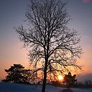 Tree and sunset by ienemien