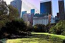 The Pond View by John Schneider