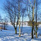 Frozen Lake by pat oubridge