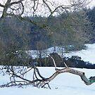 Snowy Field by pat oubridge