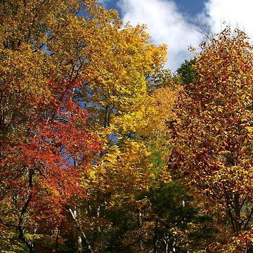 Autumns Splendor II by suddath