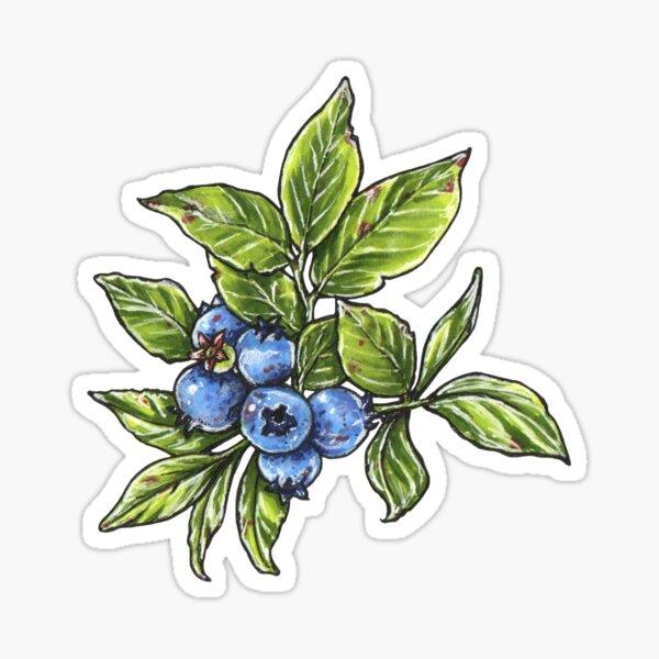 Blueberry plant Sticker