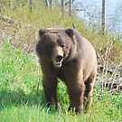 Grizzly at Bear River by Istvan Hernadi
