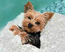 Chewie the Adorable Yorkie by melasdesign