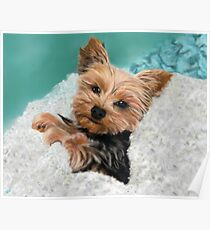 Chewie the Adorable Yorkie Poster