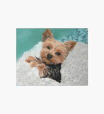 Chewie the Adorable Yorkie Art Board Print