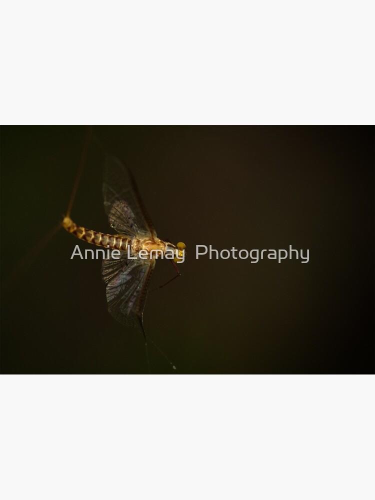 Mayfly by ajlphotography