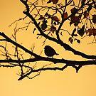 Silhouette in the Morning by Jo Nijenhuis