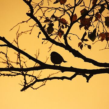 Silhouette in the Morning by Jokus
