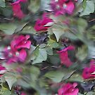 "Bougainvillea ""Oil Painting"" by dgoldman0"
