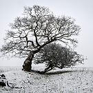 Winter Oak & Hawthorn by mikebov
