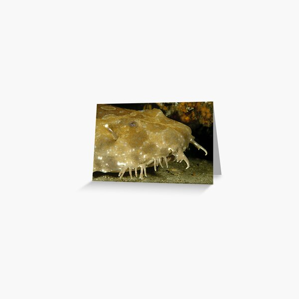 Spotted Wobbegong Greeting Card