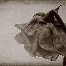 Sweet Sorrow by Nikki Smith