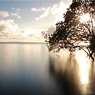 Mangrove Dreaming by Kym Howard