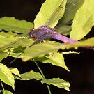 Dragonfly by adejiaslife