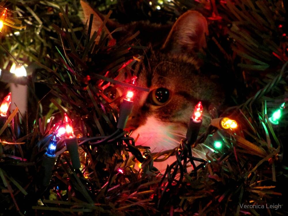 Holiday Hiding by Veronica Schultz