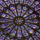 Rose Window of Notre Dame by mcrphotography