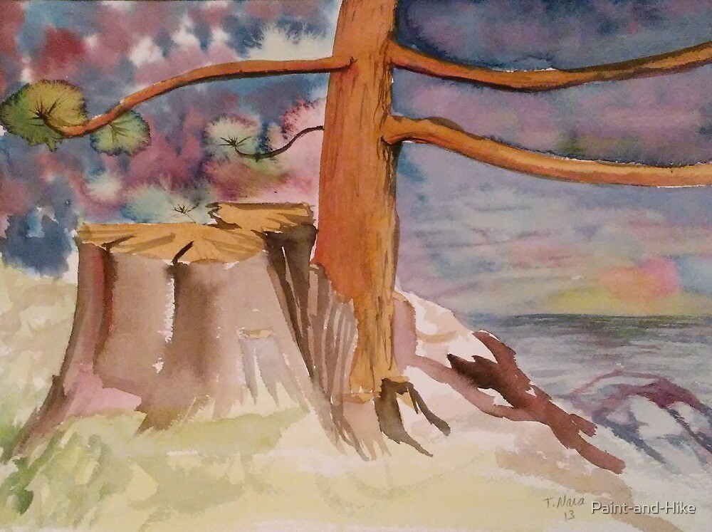 Side Lake Evergreen. New Tree from Old Stump by Paint-and-Hike