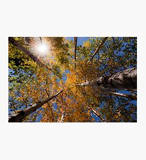 Sunburst and Aspens 1 Photographic Print