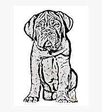 Dogue De Bordeaux Puppy Photographic Print