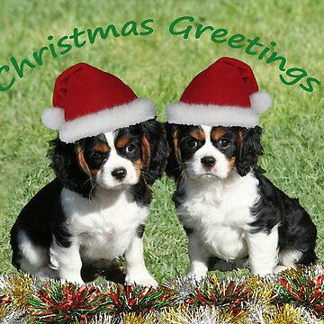 Christmas Cavaliers by JennyB