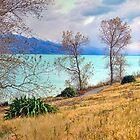 Lake Pukaki by Harry Oldmeadow