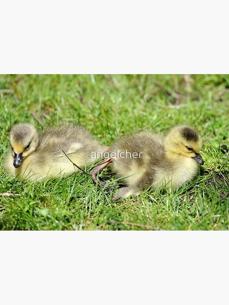 Canada Goslings by angelcher