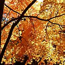 Autumn Leaves by Dilshara Hill