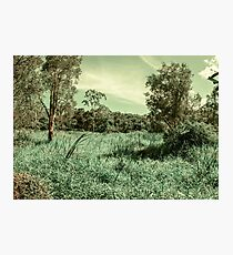 Green fields of breezy days Photographic Print