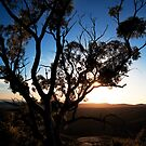 Silhouette at Dawn by Katherine Williams