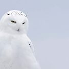 The Ghost - Snowy Owl by Jim Cumming