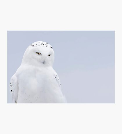 The Ghost - Snowy Owl Photographic Print