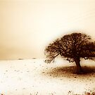 Sepia Fields Forever by Richard Horsfield