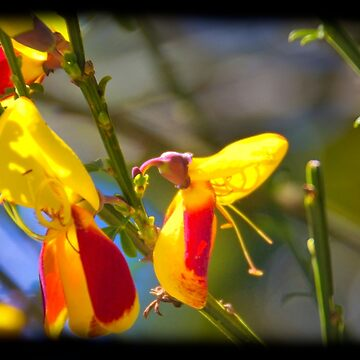 Hummingbird Flower by alabca