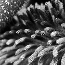 Derrynane Gardens – Microscopic Detail by Peter Sweeney