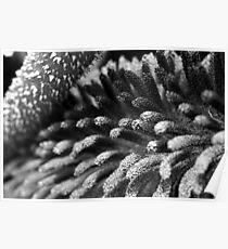 Derrynane Gardens – Microscopic Detail Poster