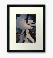 The Cold Thorn Framed Print